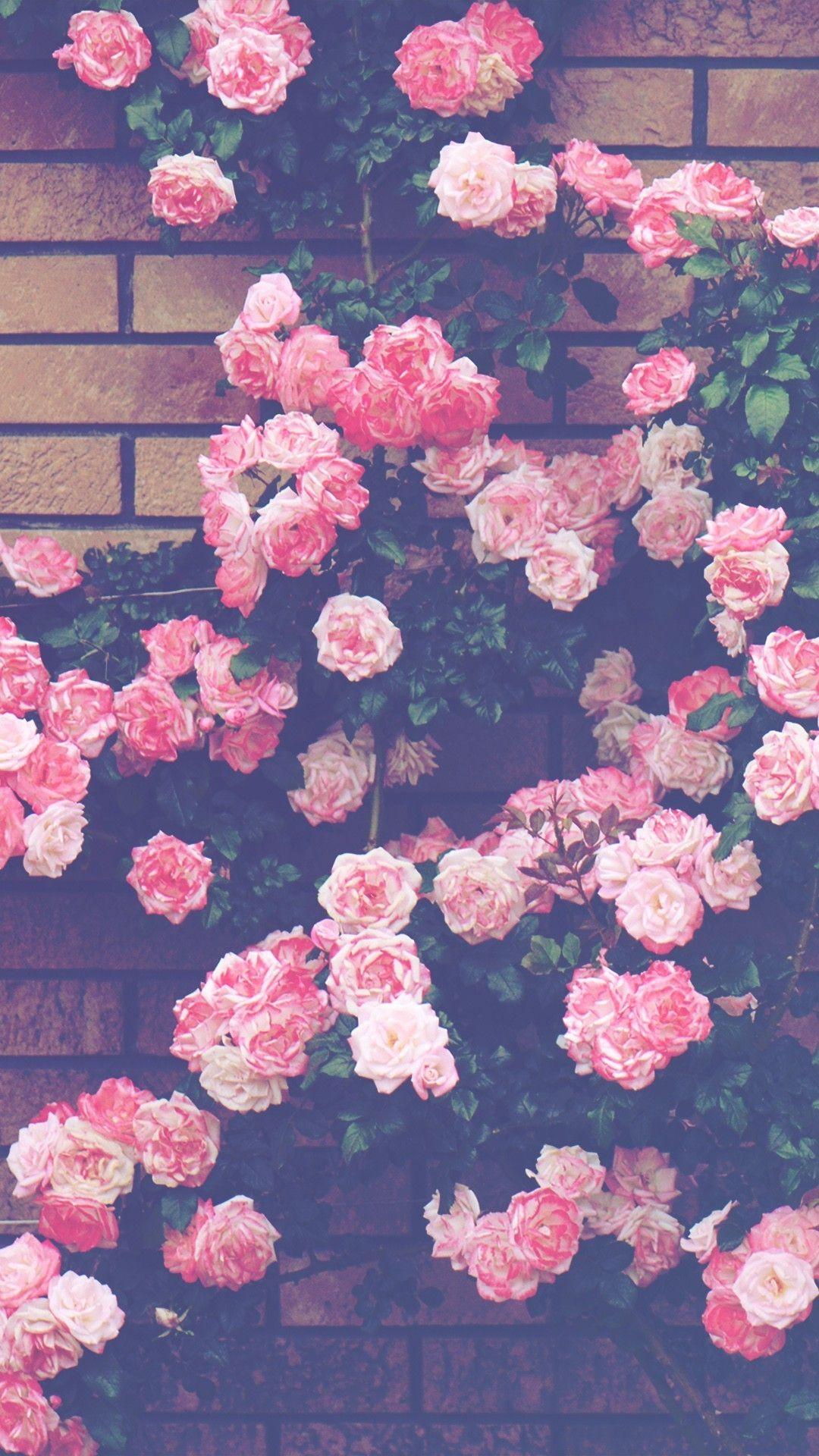 1080x1920 Hintergrundbilder Telefon HintergrA 1 4 Nde Tapete HA Bsche Tumblr Wallpaper Pink Flower