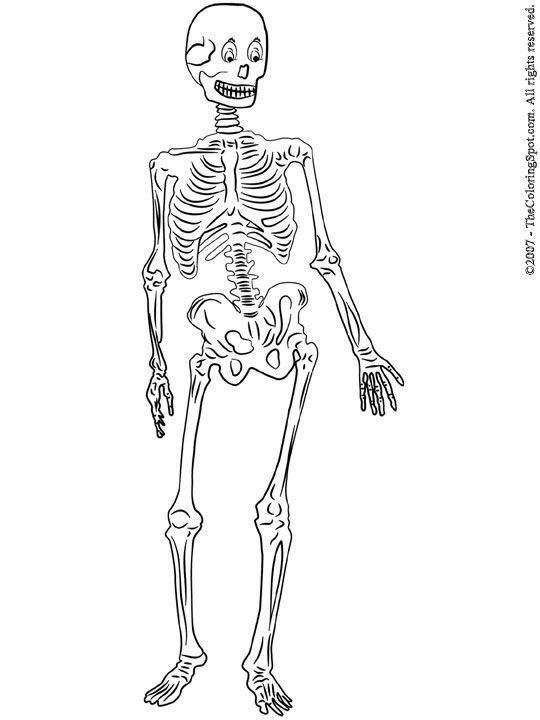 free axial skeleton coloring pages - photo#7