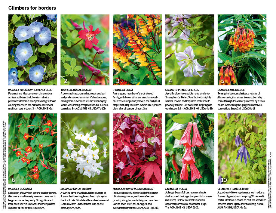 Superior Different Types Of Climbing Plants Part - 6: Things Are Looking Up - Choose Fom Our Selection Of Best Climbing Plants  And Add Vertical Interest To Walls And Trellises Or Scrambling Over Other  Plants In ...