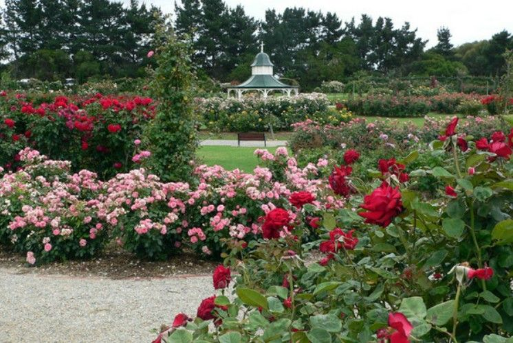 Most Beautiful Rose Gardens In The World zakir hussain rose garden, india - 9 most beautiful gardens in the
