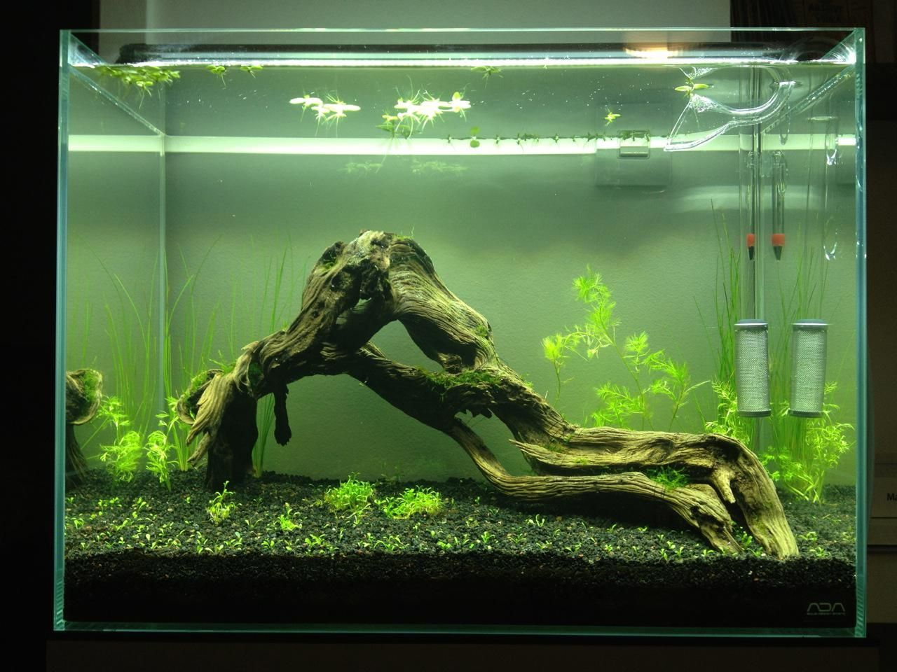 Planted tank - java moss | Tank, Aquarium, Plants