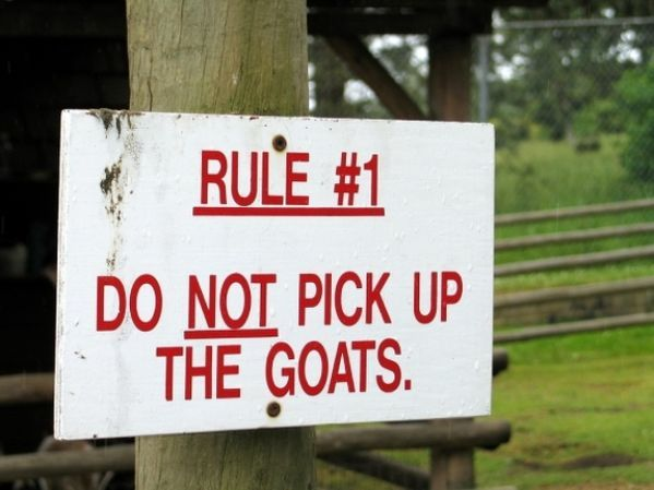 40 funny zoo signs funny pictures and zoos