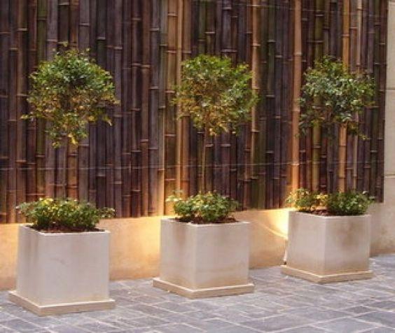 Bordes bambu buscar con google cosas para casa jardines decoracion terraza y terraza jardin - Bambu planta exterior ...