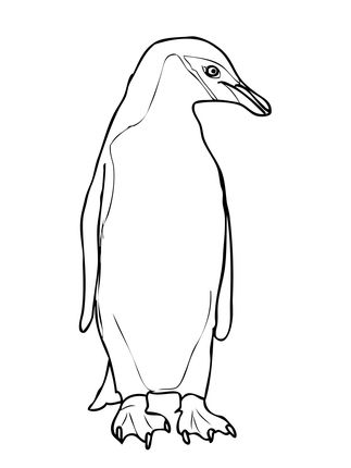 Chinstrap Penguin Coloring Page Supercoloring Penguin