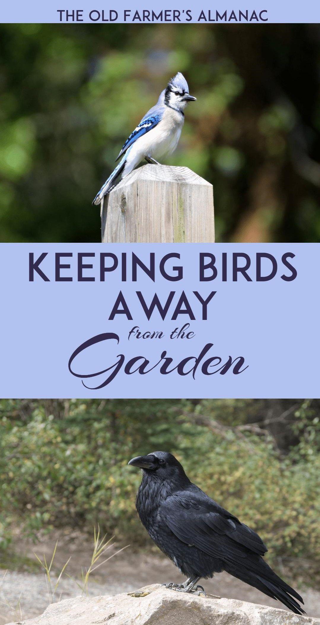 How to keep birds away from your garden birds keep