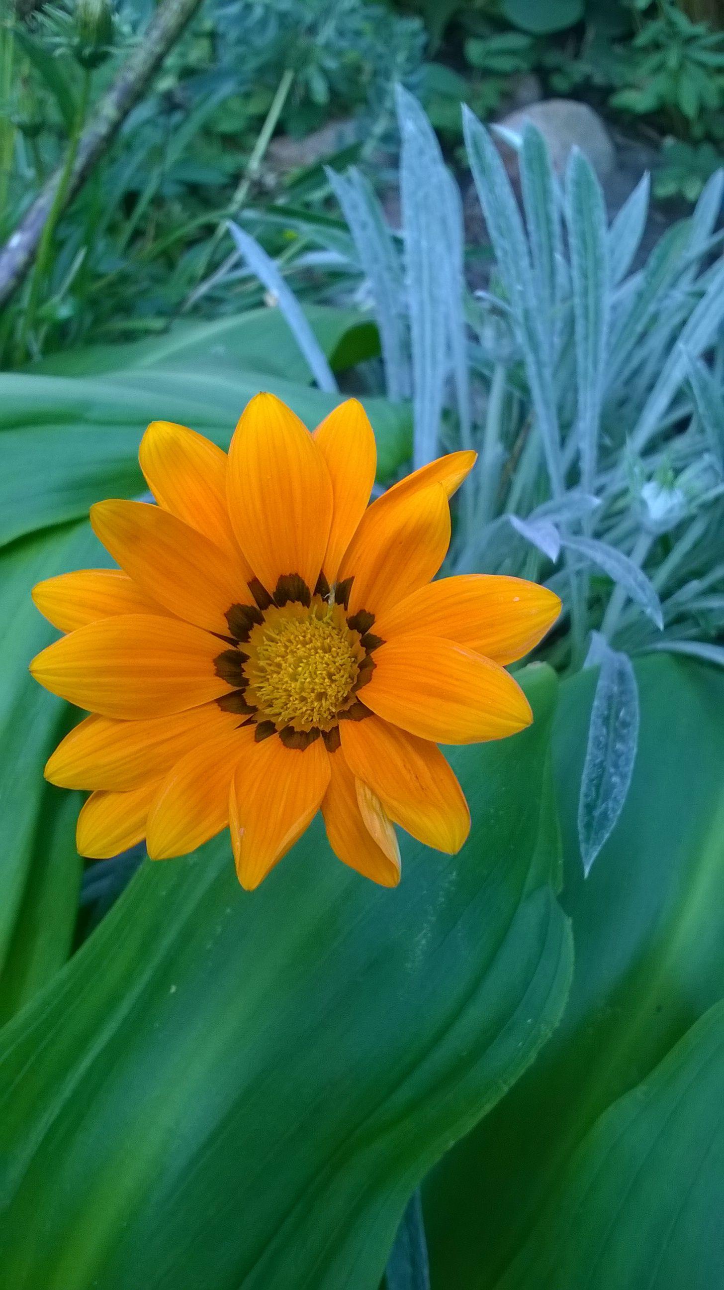 Kwiaty Wiosny Narcyzy Az Ogrodnictwo Bulb Flowers Geraniums Narcissus