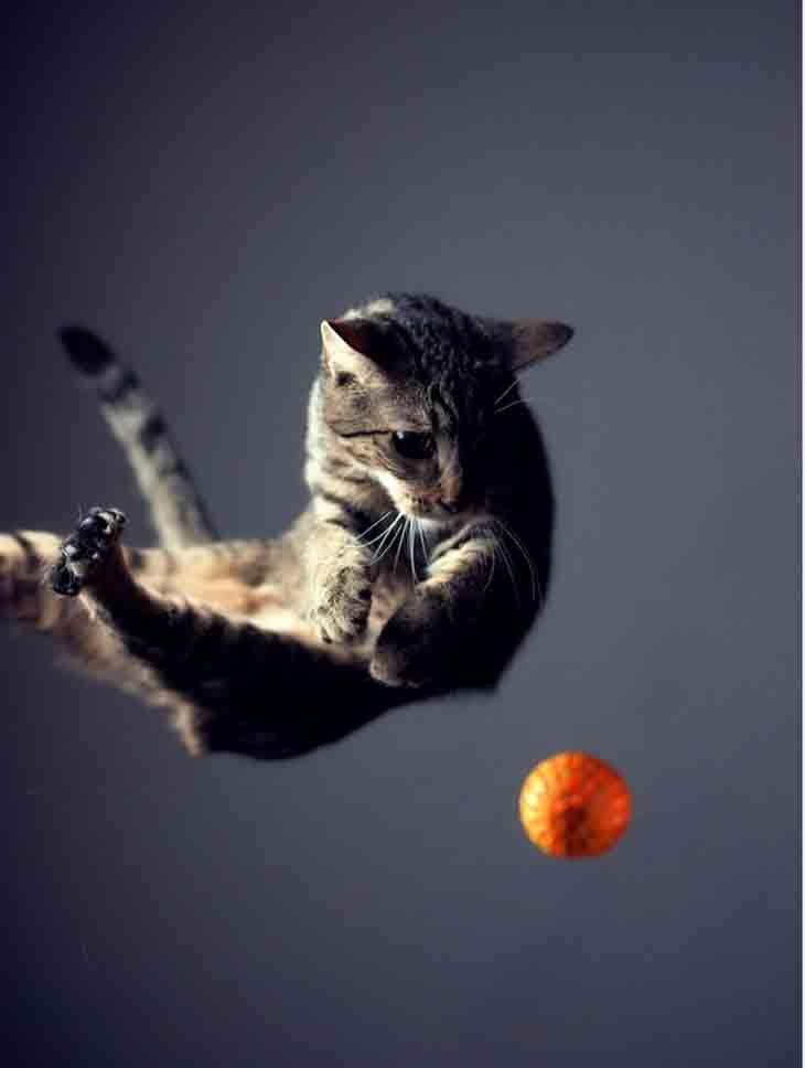 30 Most Beautiful Jumping Photography