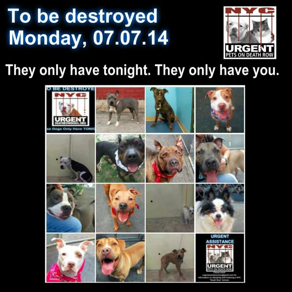 Pin by TonboMai on ANIMAL ADOPTIONS Dogs, Dog friends