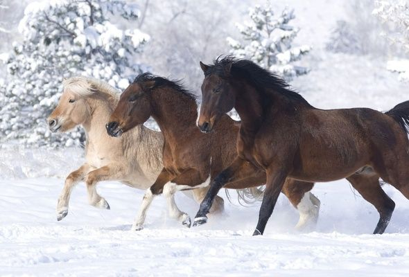 Free Winter Horse Scenes Wallpaper Horse Snow Winter