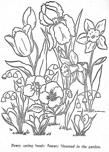 Spring flowers Tulips Daffodils