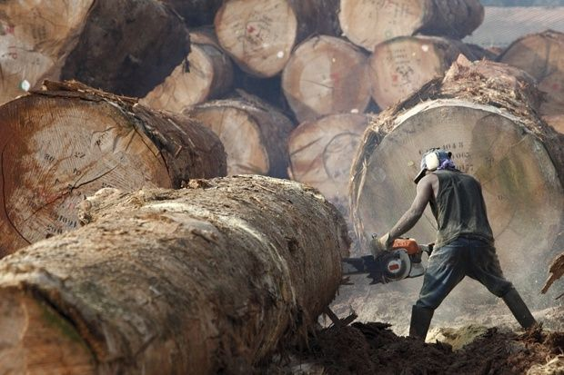 Logger Cutting Tree Trunk