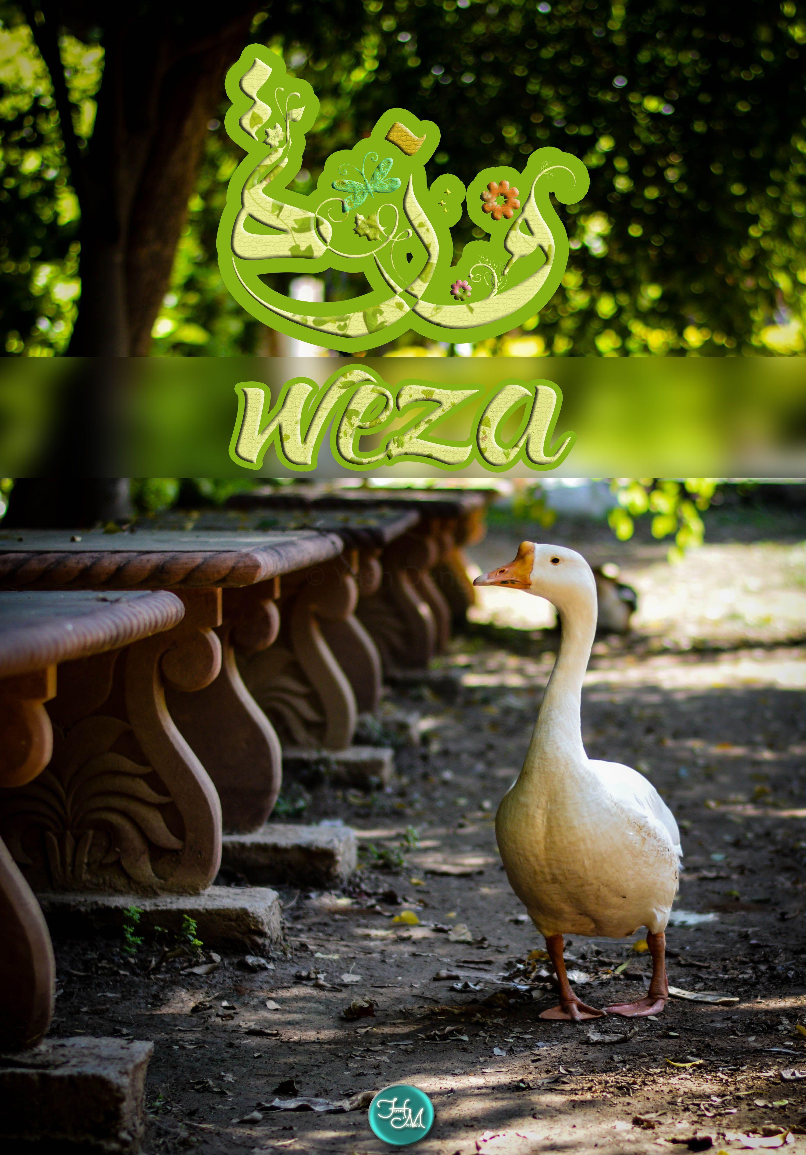 و ز ة اسم علم مؤنث عربي وهي أنثى الوز يسمى بها لجمالها وبياضها وتماي لها وأحيانا لثرائها وامتلائها وزة W Garden Sculpture Outdoor Decor Home Decor