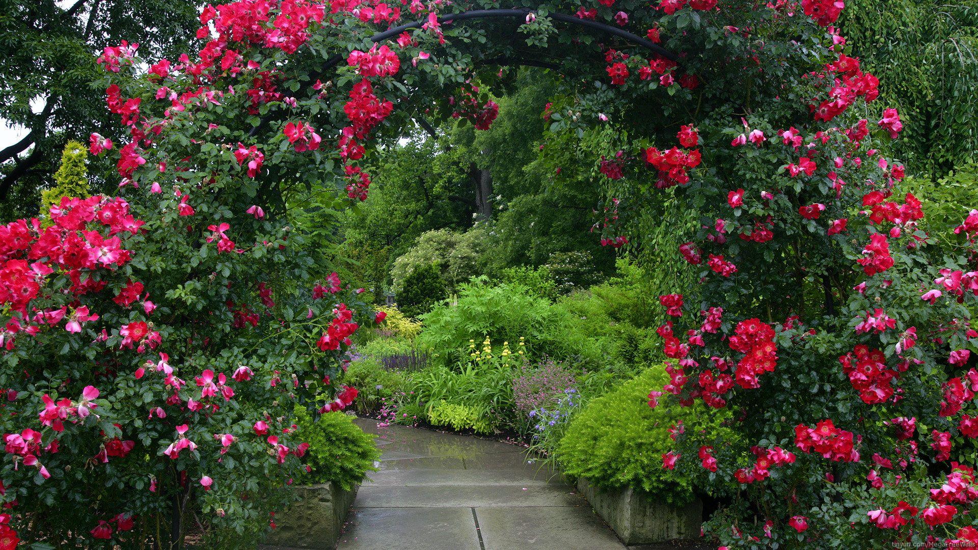Beautiful Rose Garden Wallpaper beautiful red rose garden | our tiny house | pinterest | garden