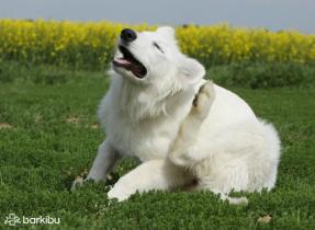 Ask Free And Find Vets Near Me Barkibu Us Dog Doctor Feline Leukemia Vets