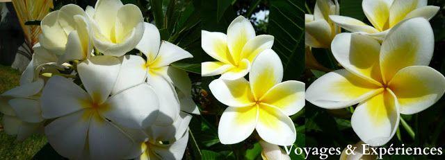 Voyages Experiences Fleurs De L Ile Maurice Beautes De La Nature