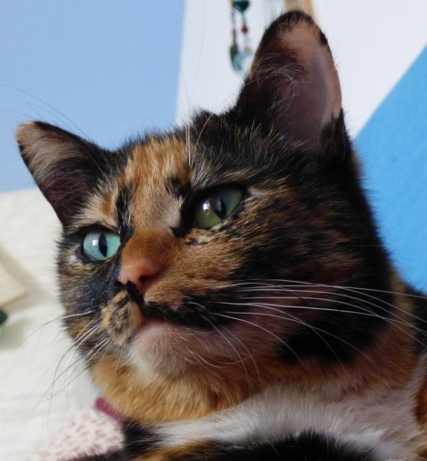 Blau Und Gr 252 N Frida Foto S Hopp Cute Cats Calico Cat