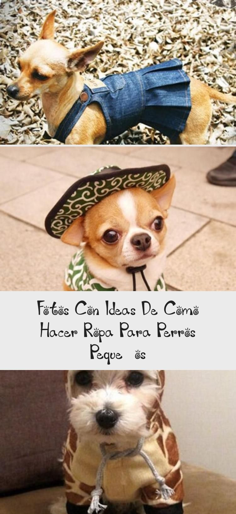 Photo of Newest Cost -Free black and white funny dogs Suggestions, Photos with ideas about …