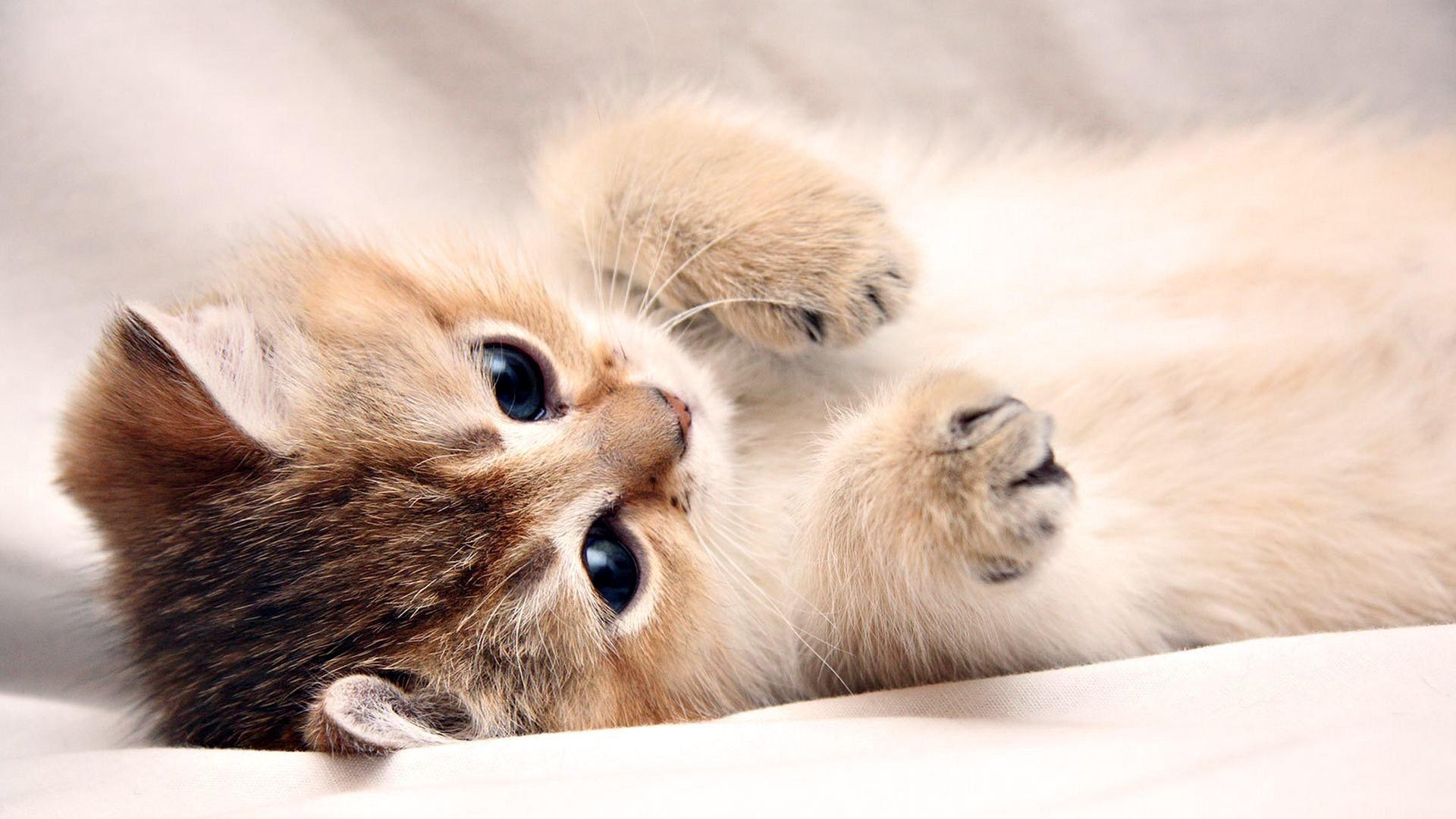 Cute Baby Kitten Desktop Wallpaper