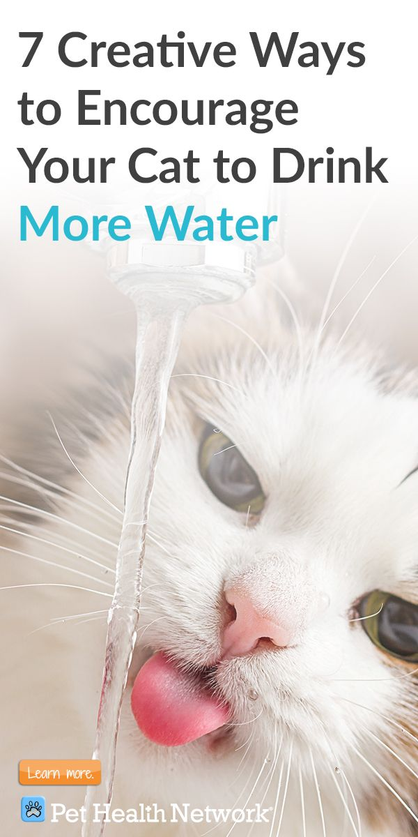 7 Creative Ways To Encourage Your Cat To Drink More Water Cat Care Cat Care Tips Cat Training