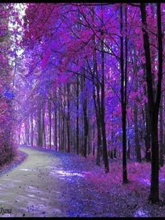 Download Purple Tree Mobile Wallpaper Mobile Toones Purple Trees Nature Photo