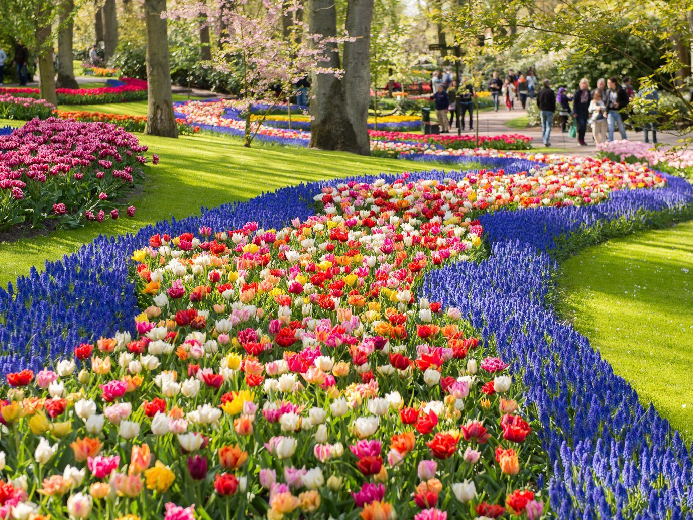 7 incredible day trips from amsterdam | wander | beautiful flowers