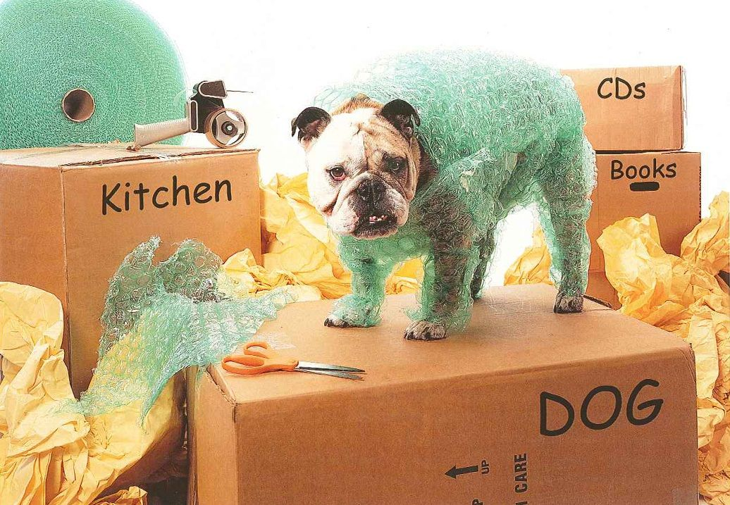 Pet Moving Tips When You Relocate Your House Know How To Train Them Adjust New Home Without Any Chaos Make Settle Easily