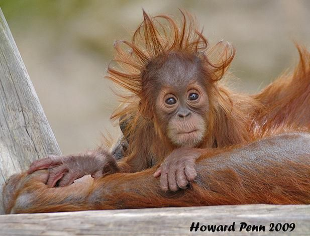 Funny Animal Pictures: Animal Bad Hair Days Caught On Camera | Global Animal