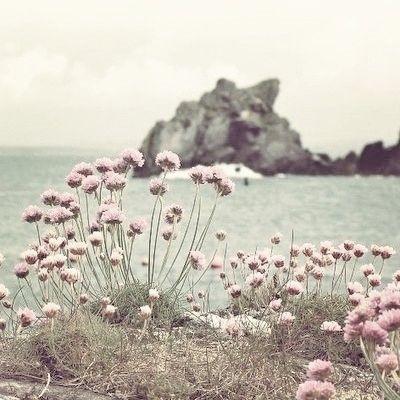 Muted palette peaceful seas show me the sea sea pinks via cowparsley mightylinksfo