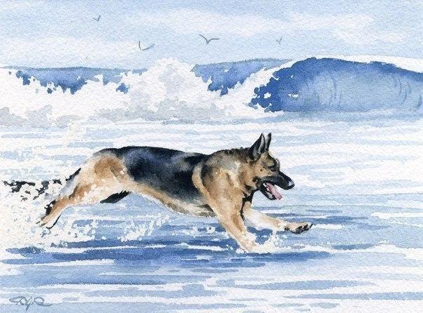 David Rogers | Собачье искусство, Собачьи портреты, Собаки
