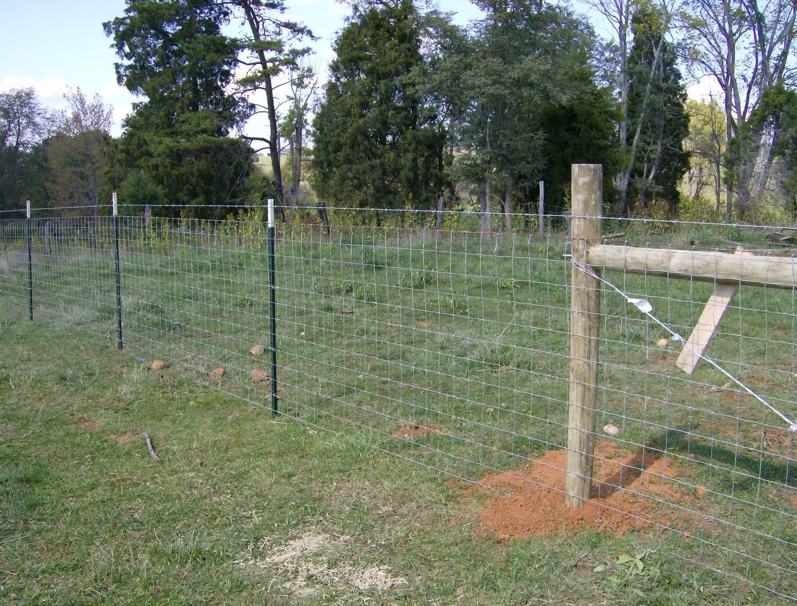 Image Result For Hog Wire Fencing Wire Fence Goat Fence Farm Fence