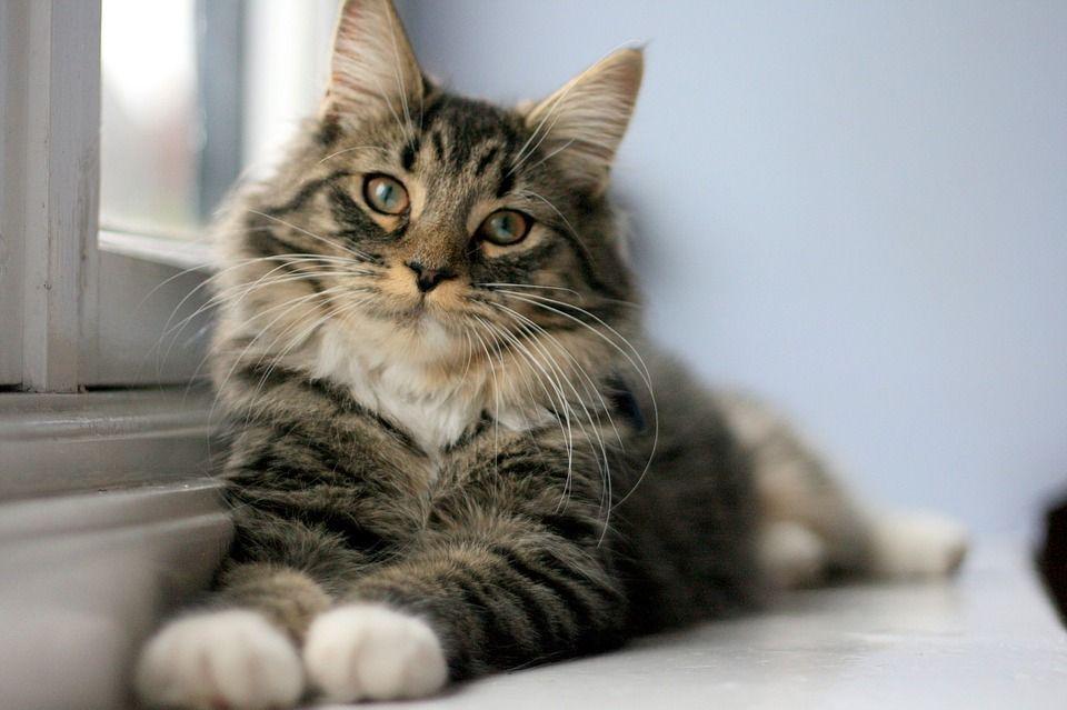 30 000 Kostenlose Katze Katzen Und Katze Bilder Sprechende Katze Katzen Getigerte Katzen