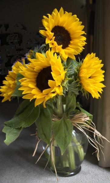 Carol S Sunflowers Wetcanvas Sunflower Flower Oil Painting Flowers Flower Painting