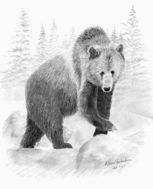 Pencil Drawings of Polar Bears | Grizzly Bear Drawings Of ...  Pencil Drawings...