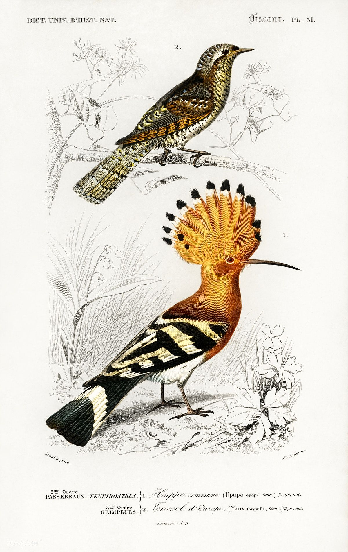 Free Public Domain Different Types Of Birds Illustrated By