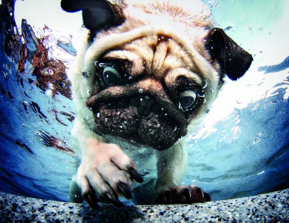 Ein wunderbares Buch: Hunde unter Wasser