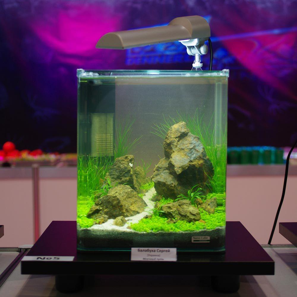 Dennerle nano cube aquarium design contest 2011 for Aquarium cube