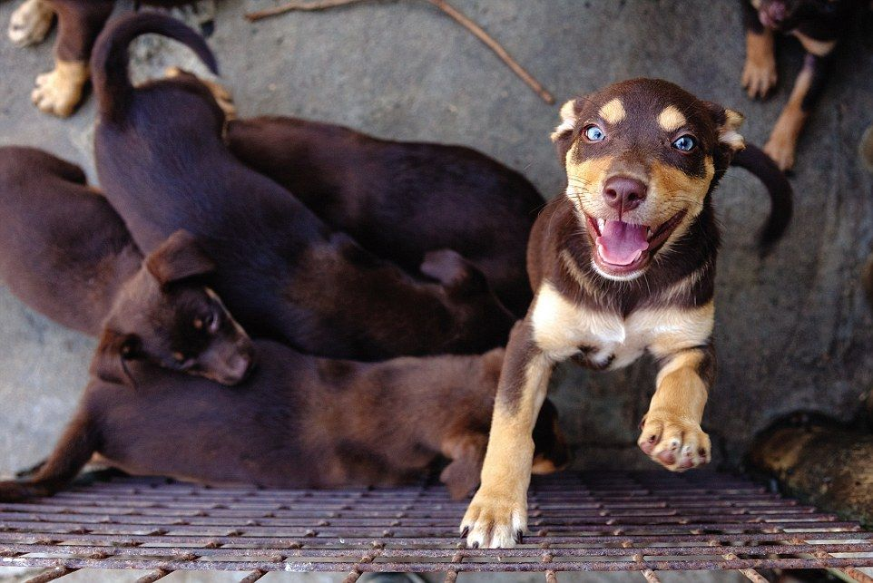 Australian Working Dog Rescue Founders Share Their Success Stories Working Dogs Dog Abuse Rescue Dogs