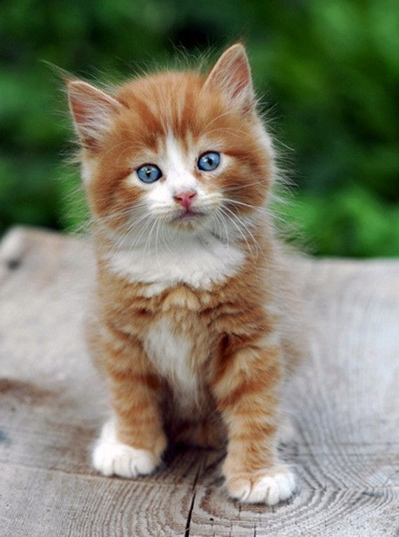 Animaux chats cats animaliser pinterest - Chaton trop chou ...
