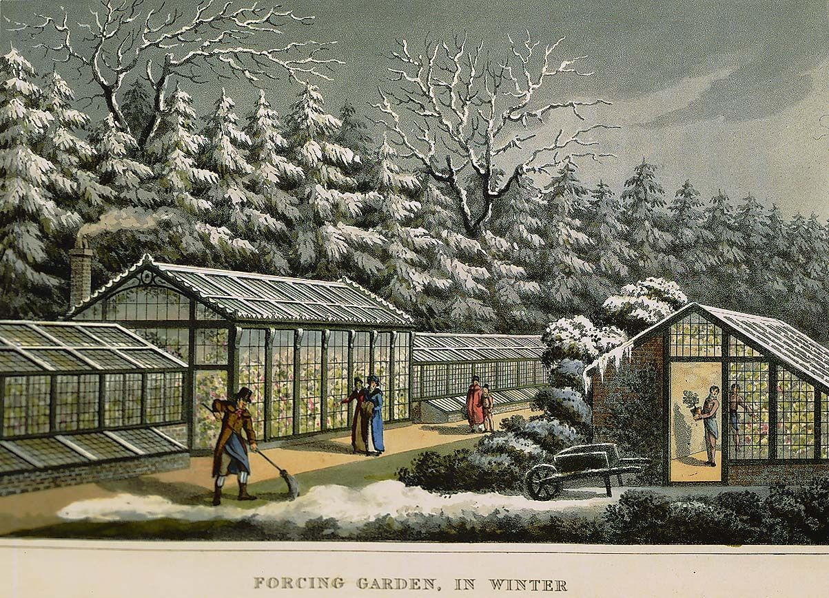 Painting of Vintage Greenhouses used for Forcing Garden in Winter