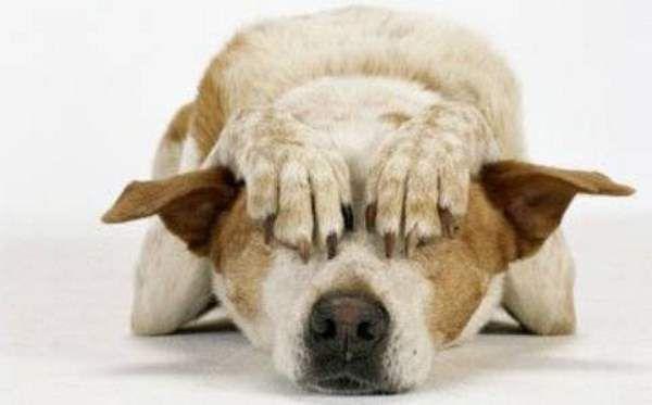 """""""Ammazzano migliaia di cani e gatti, fermiamo i botti di Capodanno"""" – Caffeina Magazine - http://www.forumcani.com/blog/2014/12/14/ammazzano-migliaia-di-cani-e-gatti-fermiamo-i-botti-di-capodanno-caffeina-magazine/"""