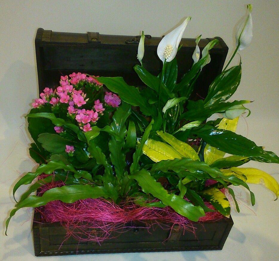 Decoraci n de baul con plantas para mam www for Decoracion con plantas