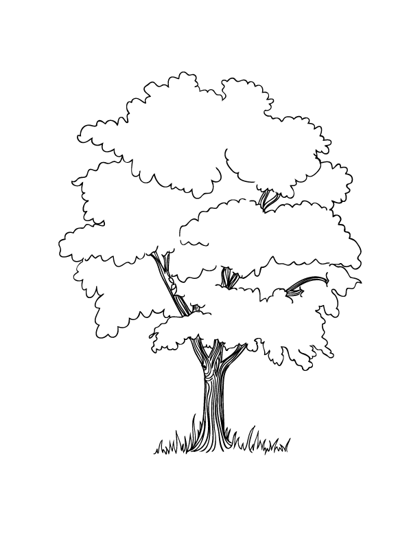 Coloring Pages Make And Takes Tree Coloring Page Tree Drawing Earth Day Coloring Pages