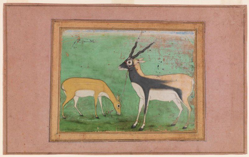 Asian Art Museum Online Collection in 2020   Mughal