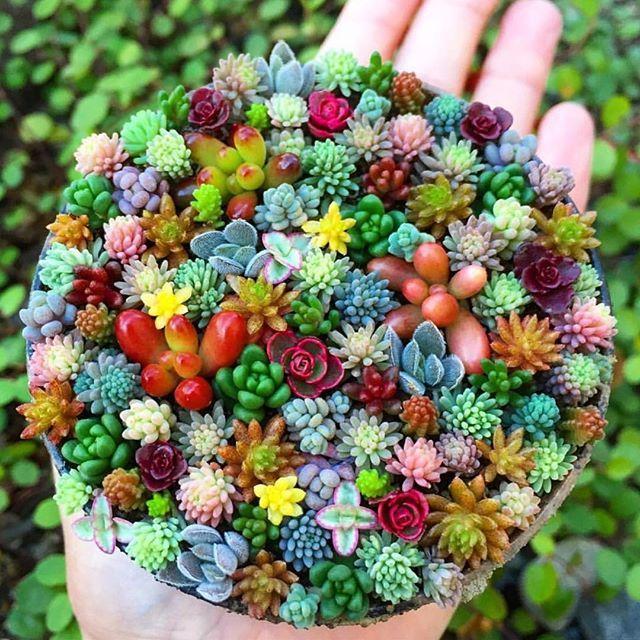 Pin von julia auf ~ 14014347_Sukkulenten Ableger Pflanzen