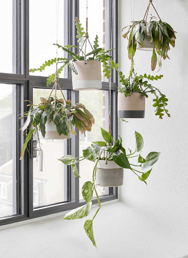Hanging plants helps create coziness with Hbsch