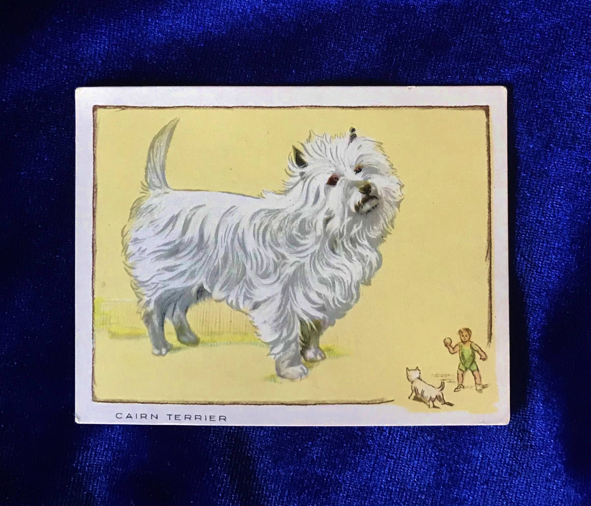 1934 Cairn Terrier Gallaher S De Lux Cigarettes Card For Sale At