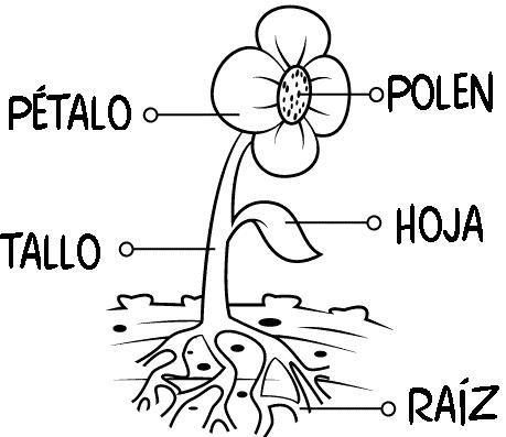 partes de la flor para colorear - Buscar con Google | Plantas ...