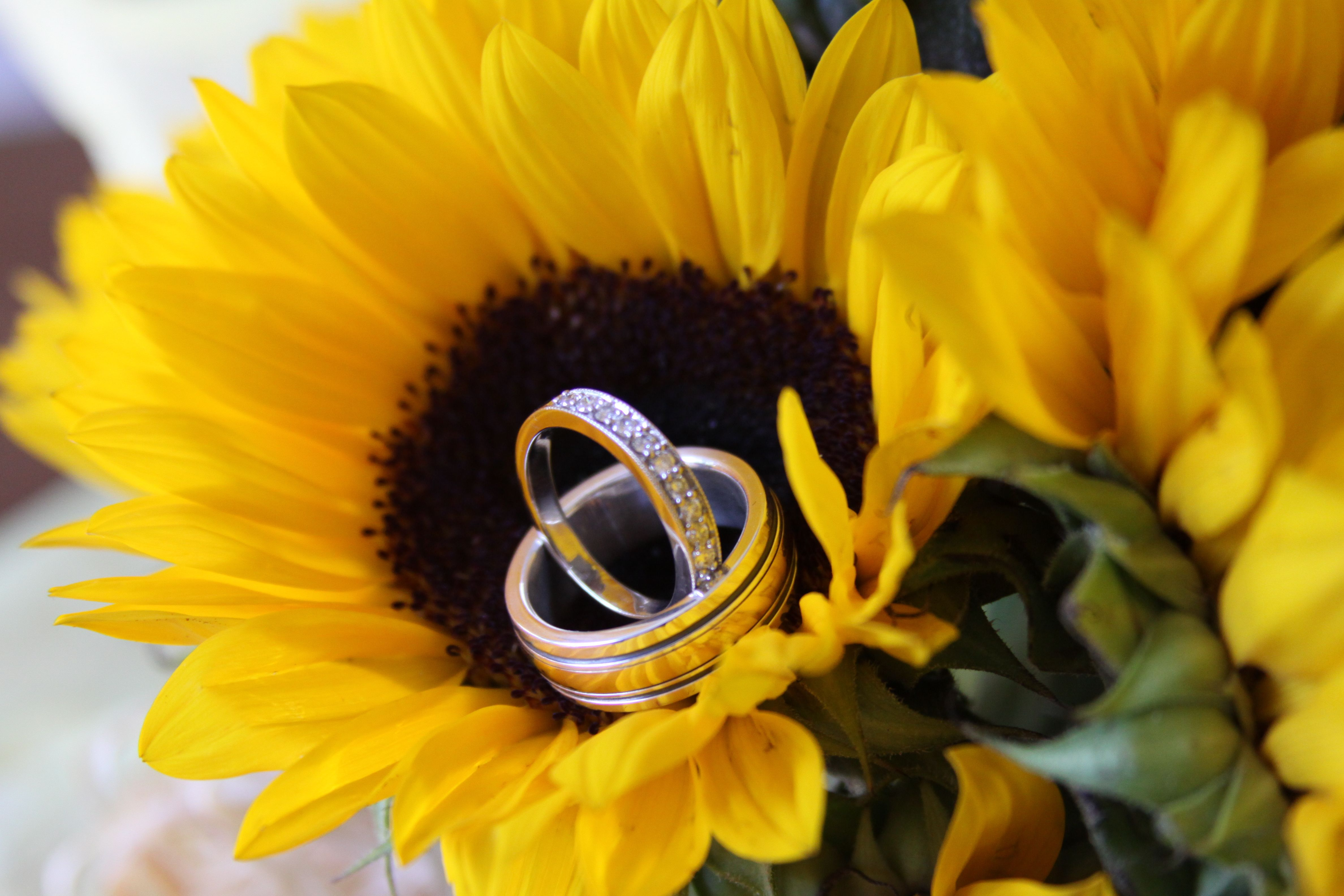 Sunflowers and Wedding Rings © Cari Wible Photography