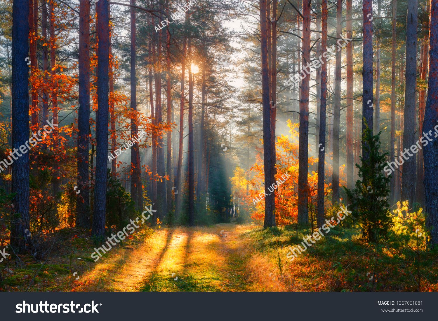 Fall Fall Forest Forest Landscape Autumn Nature Sunshine In Forest Sun Shines Through Trees Path In Natural Park Forest Landscape Autumn Nature Landscape