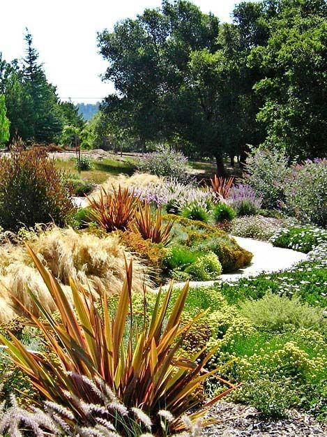 New Zealand Flax Garden landscape design, Native plant